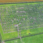 Aerial view of a Maze
